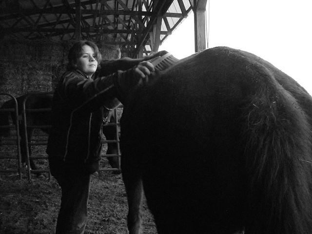 Horse Grooming. Photo by Neversky. License: CC BY 2.0.