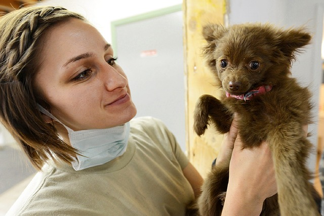 Veterinary Puppy