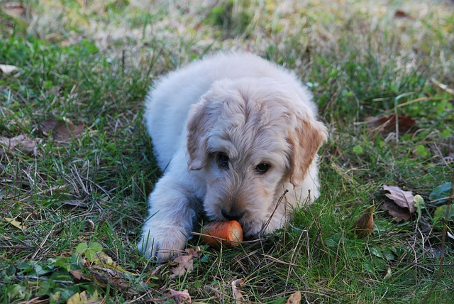 Dog Food Carrot